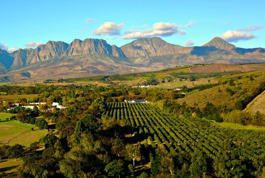 Stellenbosch, South Africa. Photo credit: Venturists